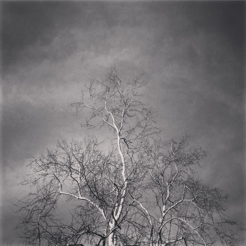 Tree in BW 01 by Tracey Clark
