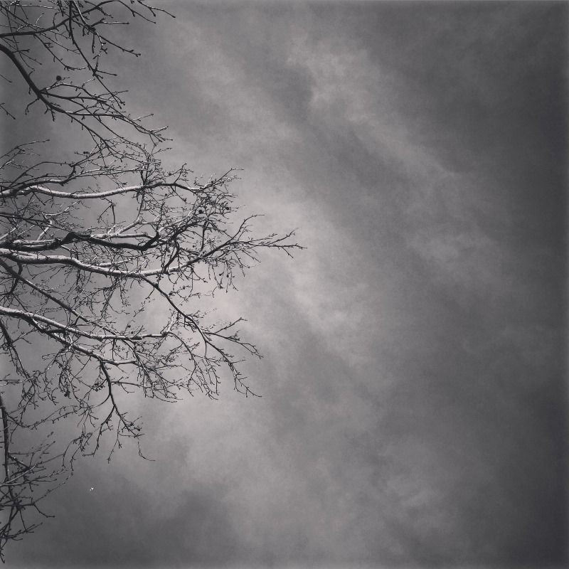 Tree in BW 03 by Tracey Clark