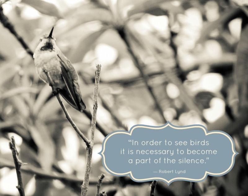 bird quote 5_800