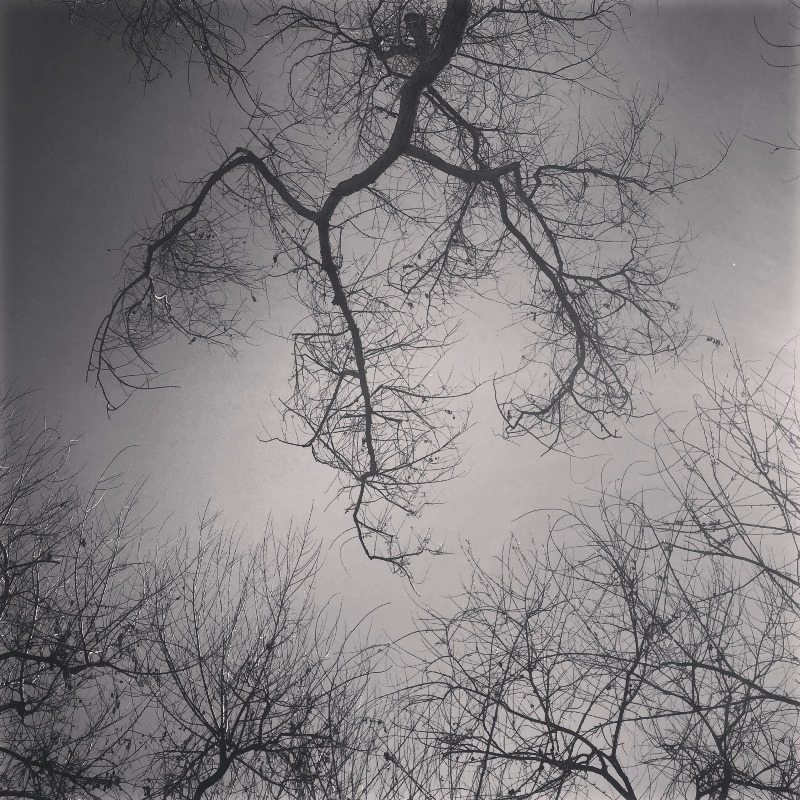Tree in BW 02 by Tracey Clark
